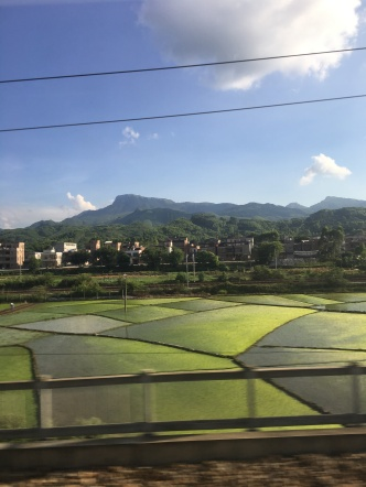 Rice paddies in Guangxi Province